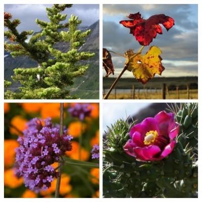 season assmt image, landscape design, garden design, vvm designs