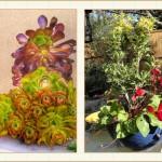 container03_Framed, landscape design, garden design, vvm designs